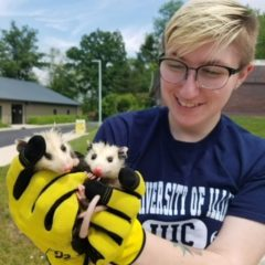 Bios major with opossums